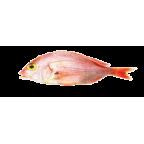Angola dentex